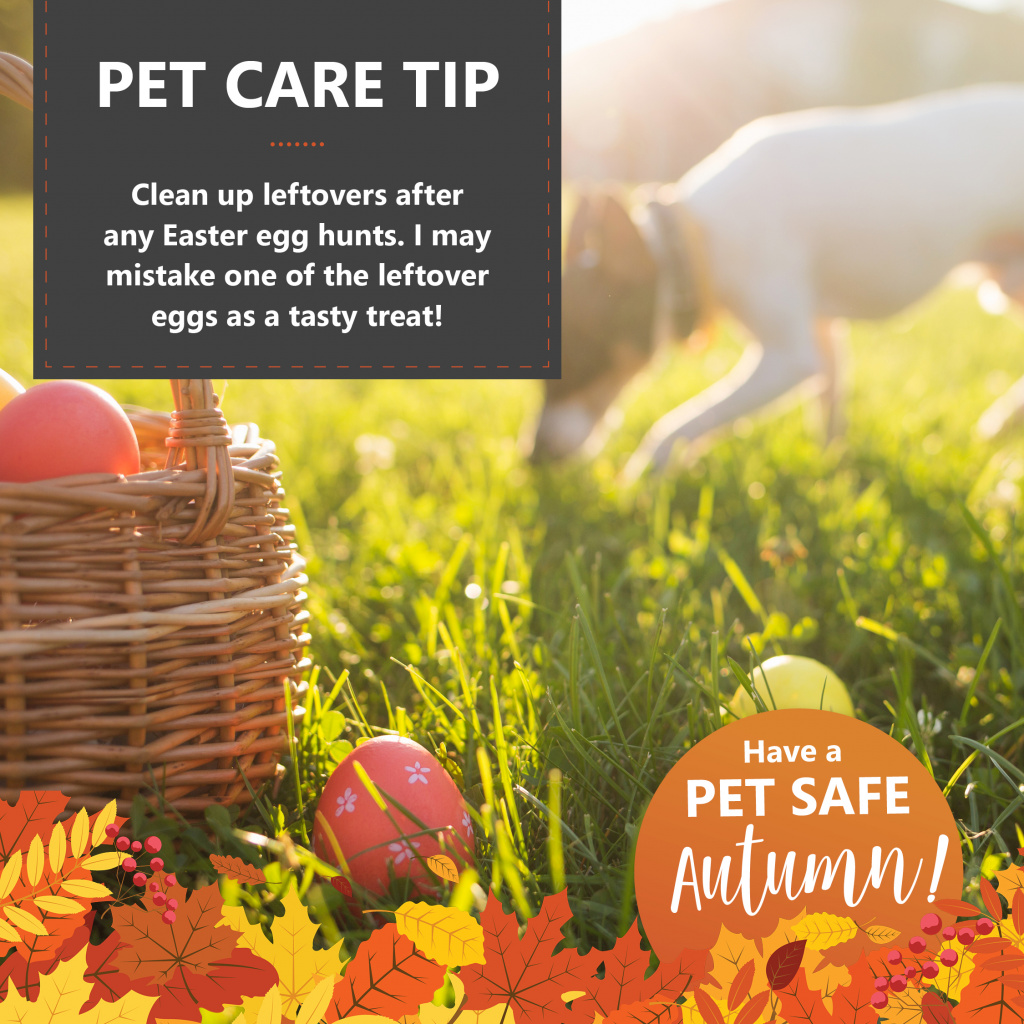 Pet Safe Autumn Tips